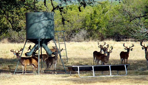 Texas Best Ranches